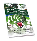 117291 - Common Native Trees of VA Book, 2nd Edition - thumbnail