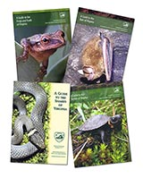 126057 - Virginia Animals Guide Bundle - thumbnail