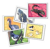 126119 - Pack of 5 Hand-Made Critter Cards, Assorted Designs - thumbnail