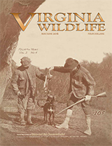 127456 -  100th Anniversary Virginia Wildlife Magazine - thumbnail