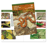 138345 - A Guide to the Snakes and Lizards of Virginia - thumbnail