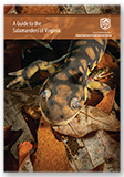 301674 - A Guide to the Salamanders of Virginia - thumbnail